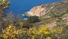 salvaschermo Isola del Giglio